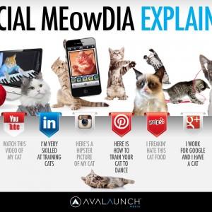 Les miaoudias sociaux expliqués avec des petits chats