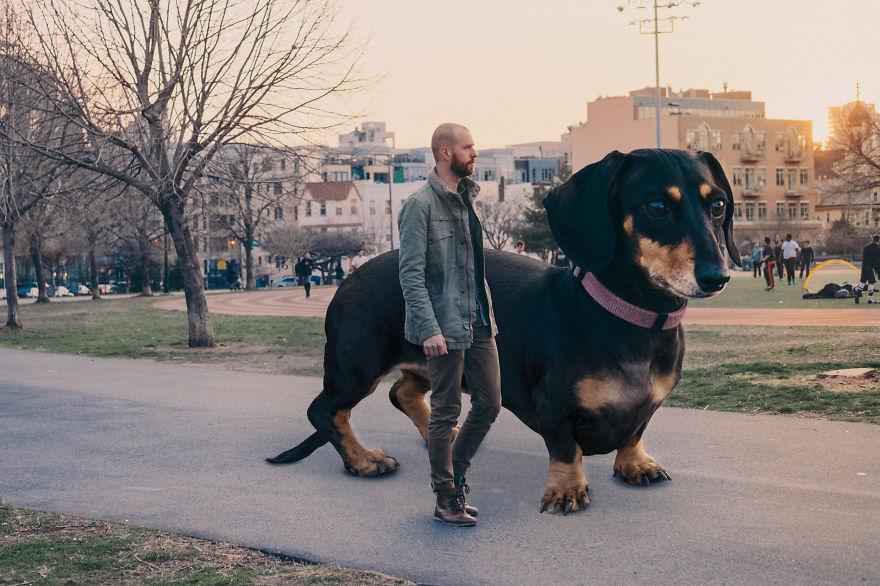 vivian the dog