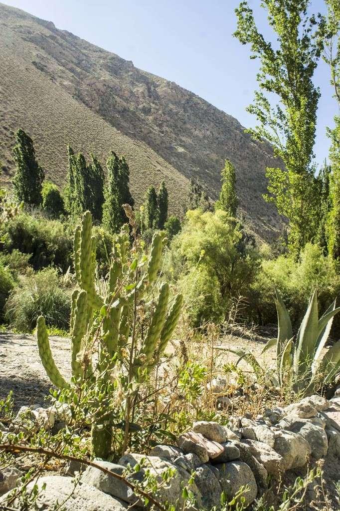 vallée de l'elqui chili