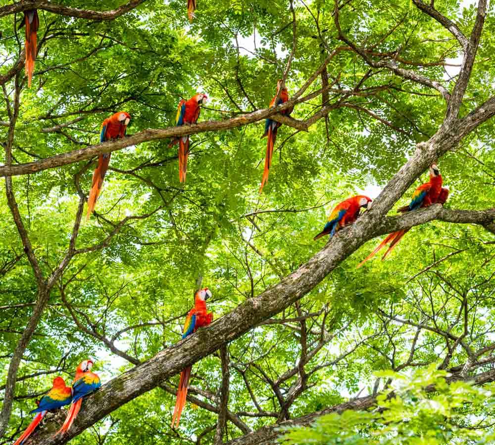 costa-rica-oiseaux