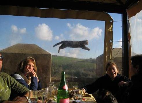 bombing flying cat