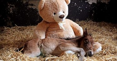 cute-poney-ours-peluche