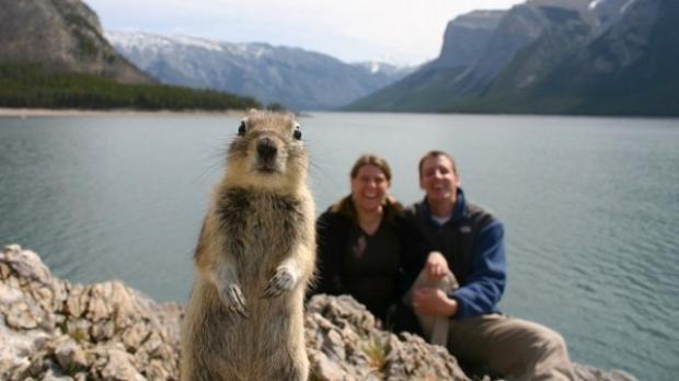 ecureuil photobomb