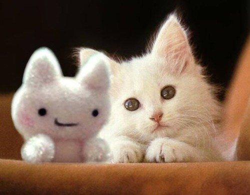 le petit chaton et sa plush
