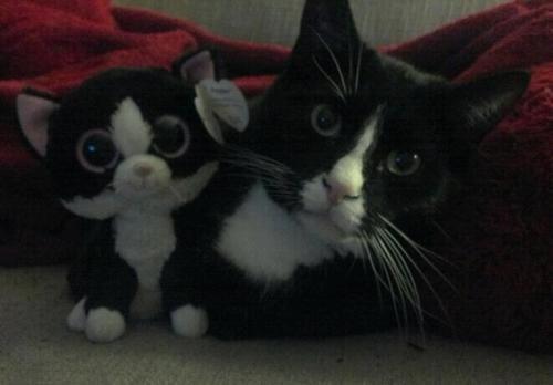 Felix le chat et sa plush