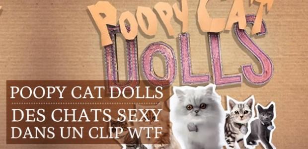 Poopy Cat Dolls : nouvelles stars du net