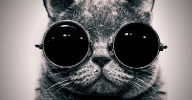 chat hypster