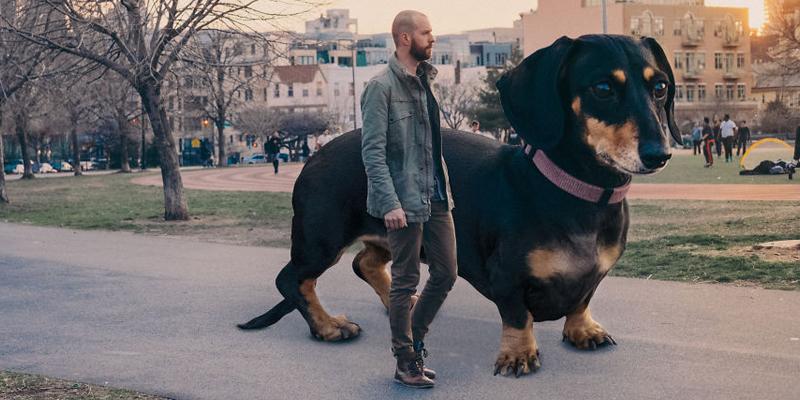 vivianthedog