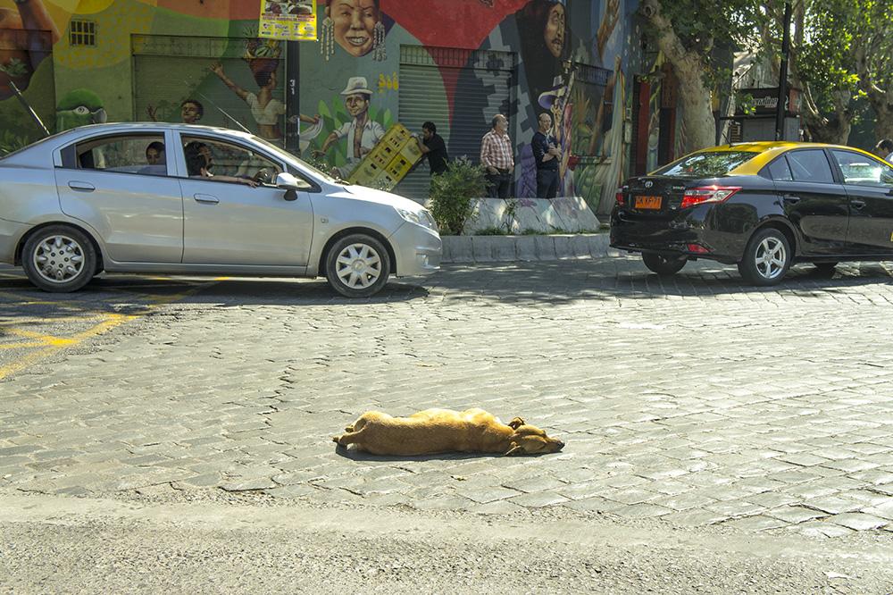 chien abandonné à santiago