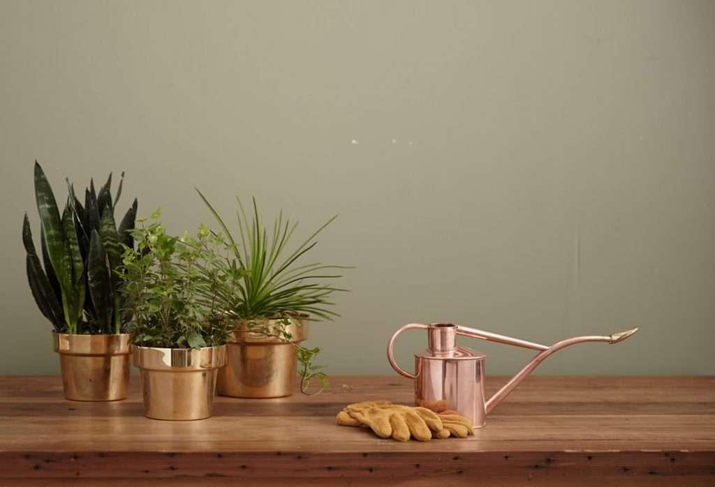 offrir-des-fleurs-plantes