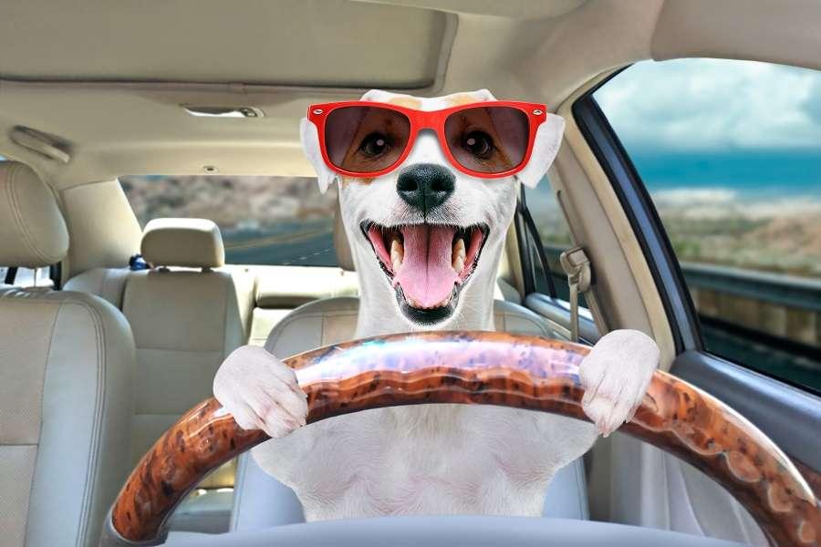 voyager-avec-son-chien